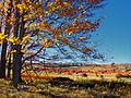 RGSP Meadow.jpg