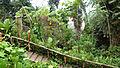 Rainforest Biome @ Eden Project (9757490595).jpg