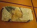 Ramses II (Le Louvre) (5447636626).jpg