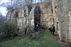Geology of Yorkshire - Malton Oolite (Upper Jurassic, Oxfordian) in Ravenswick Quarry, Yorkshire.