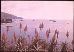 Red Hot Pokers in Madeira, with Funchal Bay Beyond, by Sarah Angelina Acland, c.1910 (1).jpg