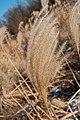 Reed 3640.jpg