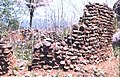 Remains of a stone-walled house at the deserted hilltop defensive site of Yagala, Sierra Leone (West Africa) (1545004182).jpg