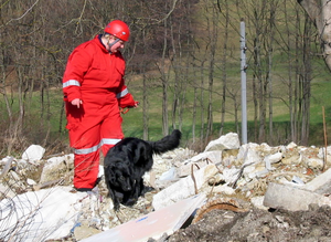 A SAR dog at an urban SAR training event, sear...