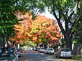 Richmond, Virginia's Fan District; Fall 2004.jpg