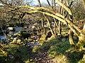 River Tavy - geograph.org.uk - 300034.jpg