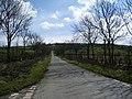 Road to Angerton Bank - geograph.org.uk - 804507.jpg