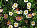 Roadside Flowers.jpg