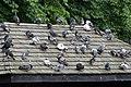 Rooftop gathering, Greenwich Park - geograph.org.uk - 558550.jpg