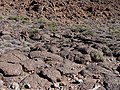 Roques de Garcia on Tenerife in Canary Islands 010.jpg