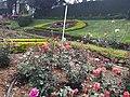 Rose Garden Ooty 4.jpg