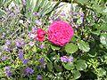 Rose Souchon.jpg