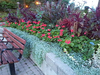 Birch Cliff - Flowers at Rosetta McClain Gardens at Birch Cliff, Toronto.