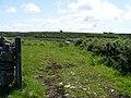 Rough pasture - Ballyconnoe South Townland - geograph.org.uk - 832719.jpg