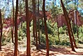 Roussillon 3.jpg