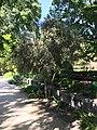 Royal Botanical Garden in Madrid 33.jpg