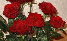 https://upload.wikimedia.org/wikipedia/commons/thumb/9/97/Rozen.jpg/220px-Rozen.jpg