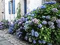 Rue du petit port a saint goustan - panoramio (1).jpg