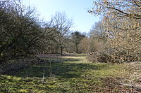 Rushy Mead nature reserve 7.JPG