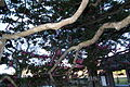 Saiho-ji Konda,Sasayama 3554.jpg