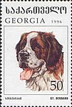 Saint-Bernard-Dog-Canis-lupus-familiaris.jpg