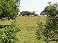 Saint-Rémy-de-Sillé (Sarthe) paysage avec vaches.jpg