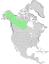 Salix arbusculoides range map 0.png