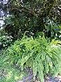 San Juan Botanical Garden - DSC06977.JPG