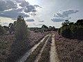 Sandiger Heide-Pfad.jpg