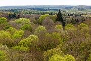 Schönstedt, Nationalpark Hainich, Ausblick vom Baumkronenpfad -- 2017 -- 0224.jpg