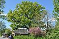 Schleswig-Holstein, Borstel-Hohenraden, Naturdenkmal 36-01 NIK 3320.JPG