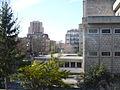 Scorcio urbano con albero di mimose,.JPG
