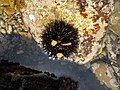 Sea - Mare (16952830857).jpg