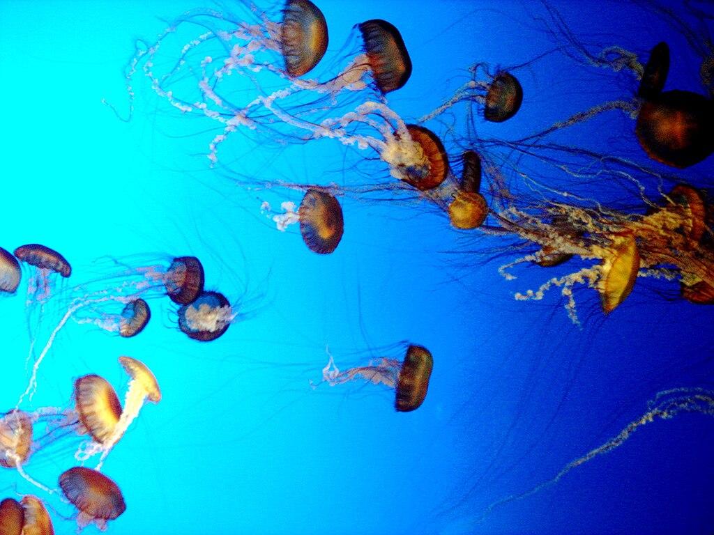 Image Result For Aquarium In Monterey