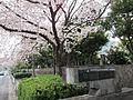 Sendaiborigawa park , Koto ward - panoramio.jpg