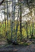 Senden, Venner Moor -- 2020 -- 6658.jpg