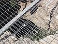 Sepphoris ovedc 40.jpg