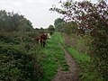 Sharing the path - geograph.org.uk - 602695.jpg