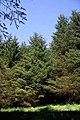 Shaw Rig Plantation - geograph.org.uk - 801608.jpg