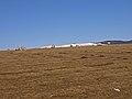 Sheep grazing - geograph.org.uk - 1736025.jpg