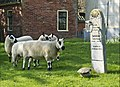 Sheep in a cemetery in Bedum.jpg