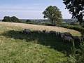 Sheep in the shade - geograph.org.uk - 537296.jpg