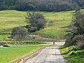 Sheep on an escarpment, near East Pennard - geograph.org.uk - 730489.jpg
