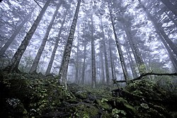 Shennongjia virgin forests.jpg