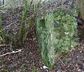 Shewalton Mill - rear wall.JPG