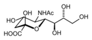 Amino sugar - Sialic acid
