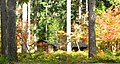 Silver Falls Stone Shelter distant - Oregon.jpg