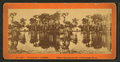 Silver Springs on the Oklawaha River, from Robert N. Dennis collection of stereoscopic views.png