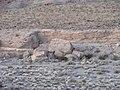 Silvercreek Wash - panoramio.jpg