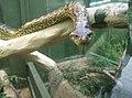 Snakes in Zoo Negara Malaysia (20).jpg